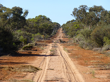 fire-access-track-mallee.jpg