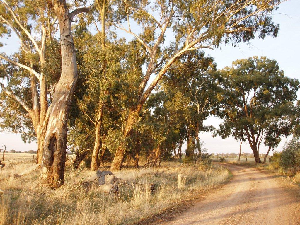roadside-vegetation1.JPG