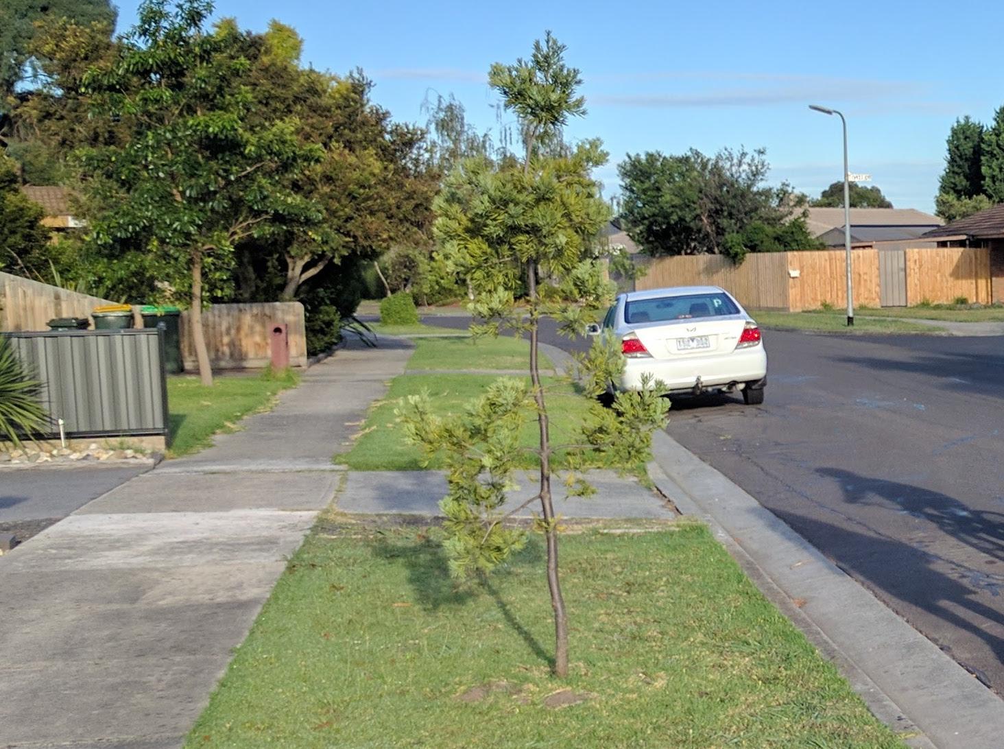 Young-Street-Tree.jpg